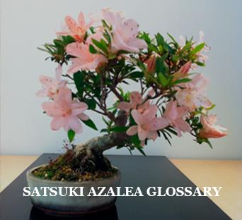 Satsuki-Azalea-Glossary